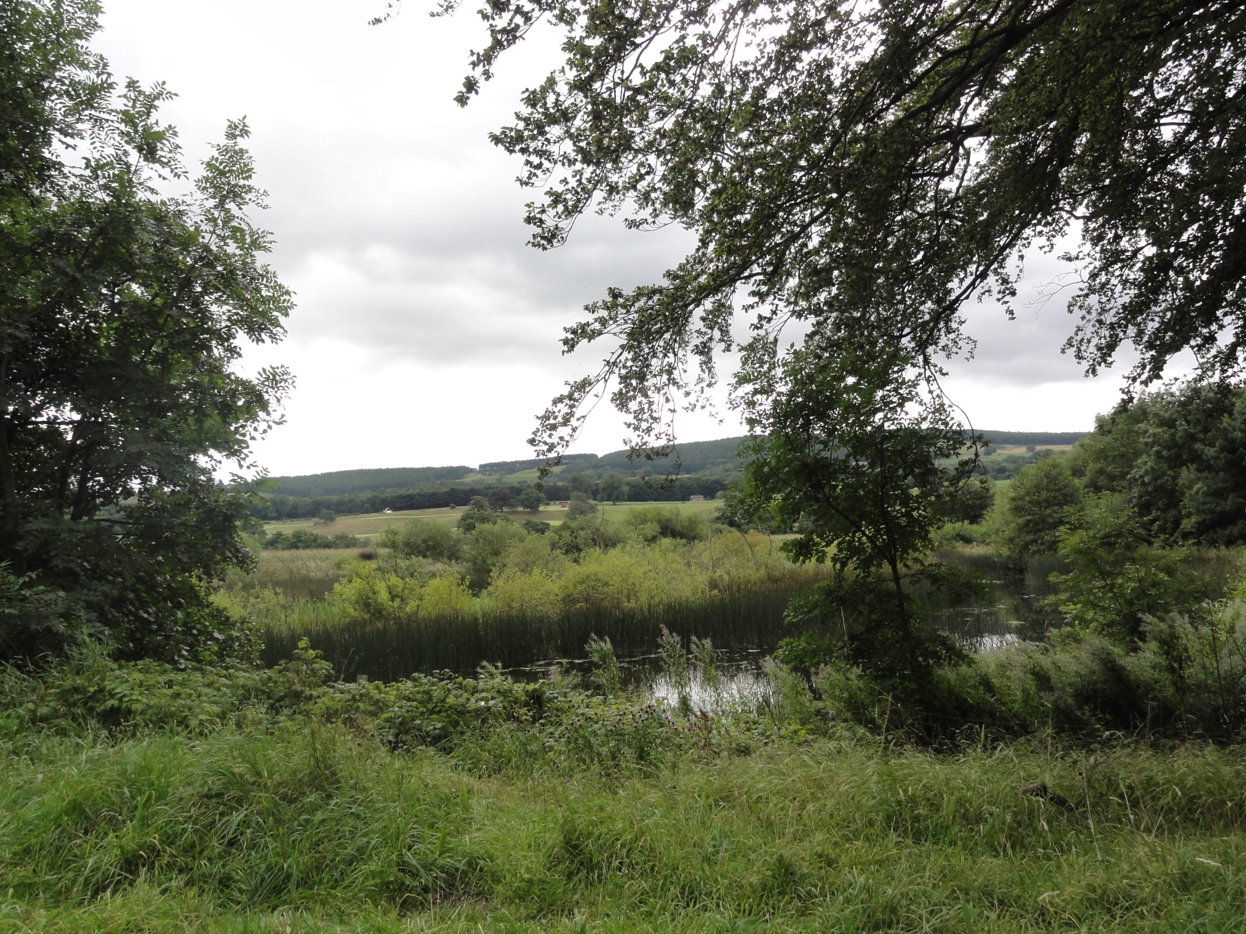 Banks of the River Ure